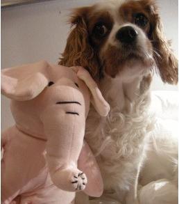 Tävla om ett kramdjur, en rosa elefant